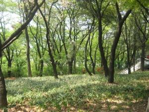 Jayu Park 2